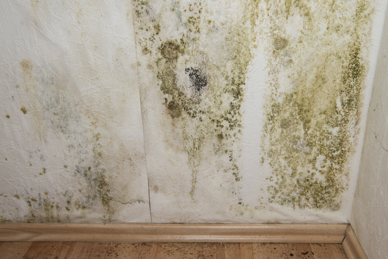 Keeping Your Home Safe From Mold